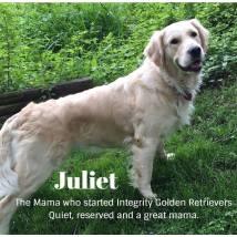 Juliet (12/8/14)
